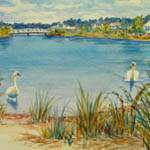 Dean's Pond Swans - Popponesset watercolor by Amy Rice