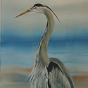 Blue Heron, Acrylic by Chris O'Dell Ferguson