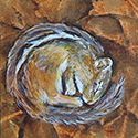 Chipmunk, Acrylic by Chris O'Dell Ferguson