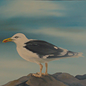 Greater Gull, Acrylic by Chris O'Dell Ferguson