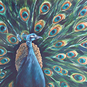 Peacock, Acrylic by Chris O'Dell Ferguson