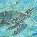 Sea Turtle, Acrylic by Chris O'Dell Ferguson