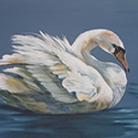 Swan, Acrylic by Chris O'Dell Ferguson
