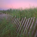 Beach Grass Fence by Ned Manter